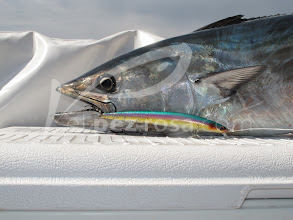 Photo: SeaShot Minnow SEA7 de Payo Int