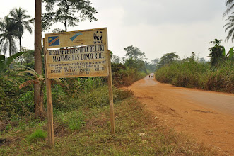 Photo: last DRC remnant of Mayombe forest