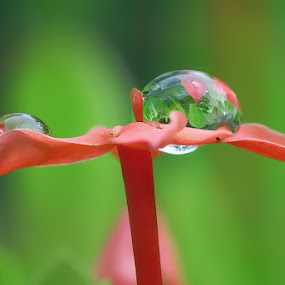 by Handri Fitrido - Nature Up Close Water