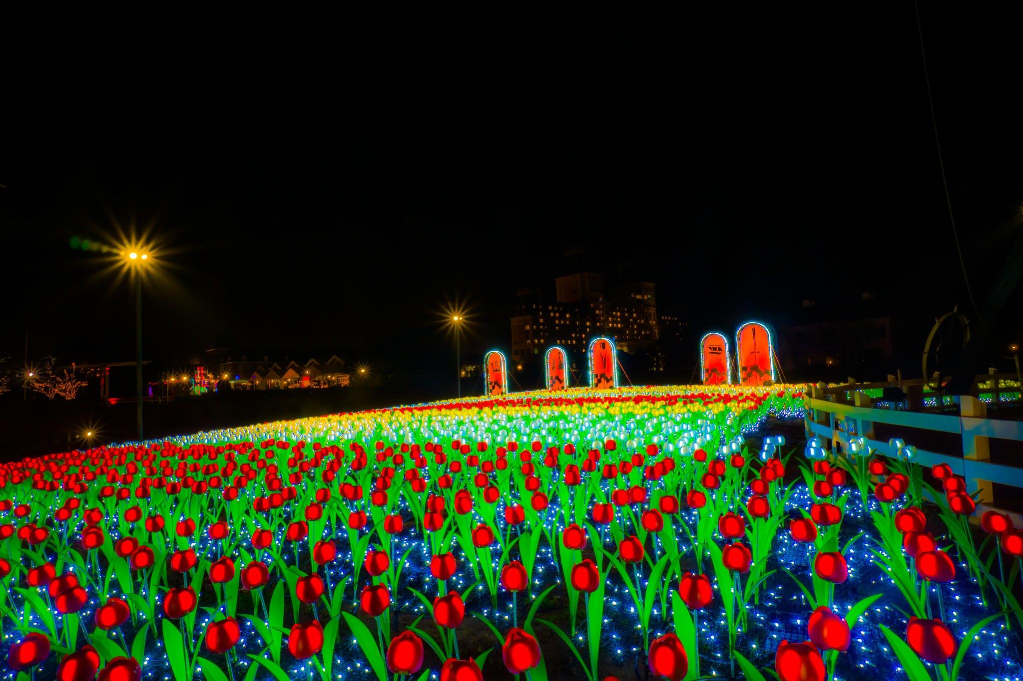 Huis Ten Bosch illumination Kingdom of light Tulip garden2
