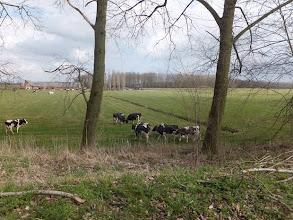 Photo: Elshoutse Zeedijk Heusden, april 2013