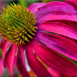 flower by Nic Scott - Flowers Single Flower ( flower,  )
