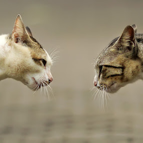 face to face by Yan Abimanyu - Animals - Cats Portraits
