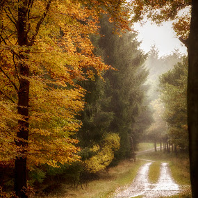 An then came the rain by Buffan Walter - Landscapes Forests ( haze, forrest, leafs, rainy day, rainy, autumn, trees, gravelroad, road, rain,  )