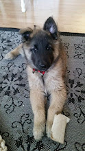 Photo: 9 weeks- in the new home