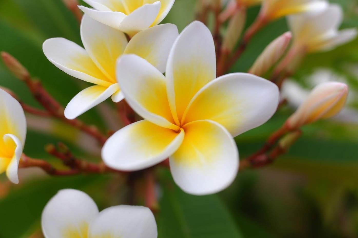 花、よりいっぱい