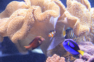 Photo: The stars of Finding Nemo, Dori and Nemo!