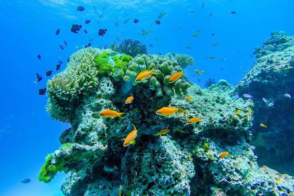 Snorkel on colourful reefs with plenty of fish