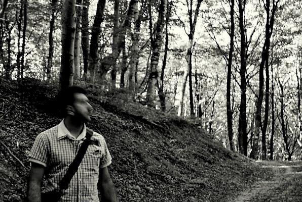 A forest di Samvise65