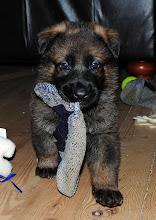 Photo: Flekken leker med en sokk, 4 uker og 5 dager