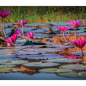 by Manash Kaushik - Flowers Flower Arangements