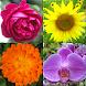 花 - 美しい植物についての植物のクイズ