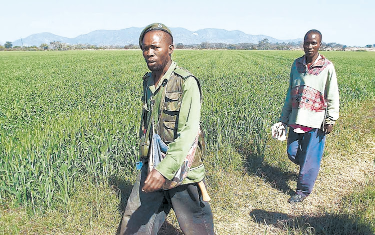 Supporters of then-president Robert Mugabe on their way to invade a farm in Zimbabwe's Glendale district, about 100km north of the capital, Harare, in July 2000. Picture: SUNDAY TIMES/KAREL PRINSLOO