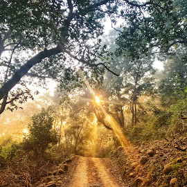 Forest by Nazneen (voiceofcamera.com) - Digital Art Places ( forest with golden light )