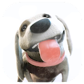 Puppy Licks Screen Animation icon