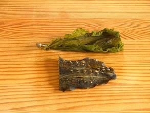 Photo: Hvad er forskellen på de her to slags tang? Begge er sukkertang. Det øverste er en spinkel kvalitet høstet om foråret. Det nederste er en kraftig kvalitet, høstet om efteråret. Begge kvaliteter har deres fortrin ;-) Blærerne i det nederste stykke skyldes forresten det er ristet på brødrister. Det er derved de popper op.