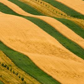 South Moravia - II. by Antonín Vystrčil - Uncategorized All Uncategorized ( field, yellows, waves, south moravia, trees, tourism, warp, freen, shrubs )