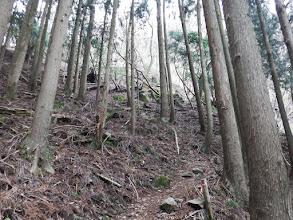 植林を登る