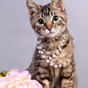 Vanderbilt Pearls by Ranee Rose - Animals - Cats Portraits ( cats, cat, kitten, brown tabby, pearls, pets, whisker, paws, kittens, cute, pretty )