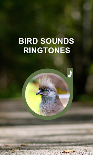 Bird Sounds Ringtones