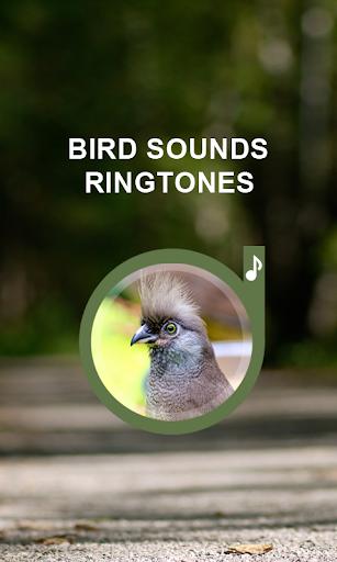 鳥呼叫鈴聲手機
