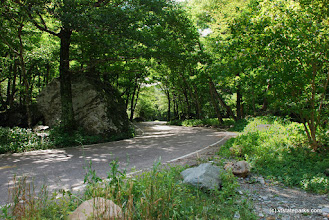 Photo: The winding road in Smugglers' Notch State Park by Linda Carlsen Sperry
