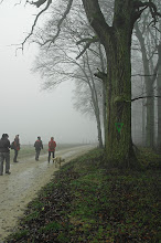 Photo: de beaux arbres dans les forêts de Woelfling