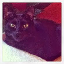 Photo: Mr. S. portrait (a friend's cat) #intercer #cat #cats #pet #pets #black #petsofinstagram #catsofinstagram #pretty #beauty #beautiful #eyes #portrait #look #cute #white - via Instagram, http://instagram.com/p/ffzWEcpfip/