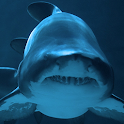 live sharks wallpaper icon