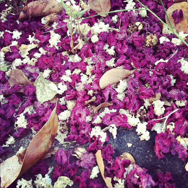 Fallen flowers by Elisabeth Richards - Instagram & Mobile Instagram