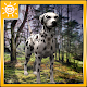 Dalmatian Survival Simulator (game)