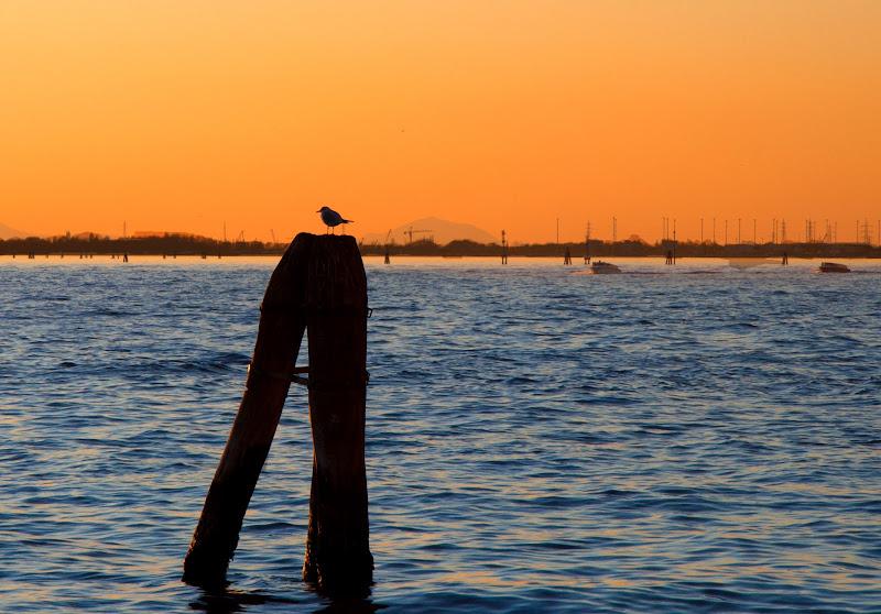 Laguna di Venezia al tramonto di FedeZ