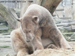 Photo: Knut nimmt den Sandhaufen neugierig in Augenschein ;-)