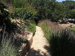 Photo: Looking down one of the paths showing fruit trees , herbs , drylaid asphalt stabilized adobe walls, and Vetiver.  vetiver is a lovely landscaping plant, and in this instance provides privacy, and a habitat for birds, beneficial insects and other mamals