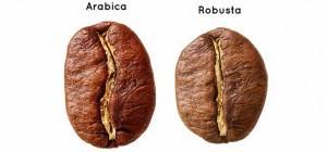 Robusta-Arabica-bean 阿拉比卡羅布斯塔