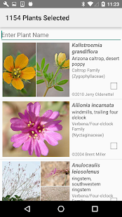 West Texas Wildflowers- screenshot thumbnail