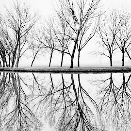 On the river by Alberto Schiavo - Black & White Landscapes