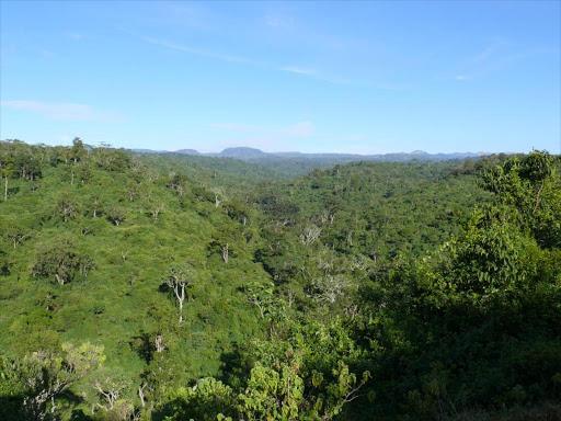 Aberdare Forest.