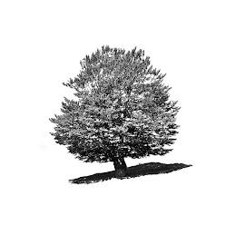 by Agatanghel Alexoaei - Black & White Flowers & Plants
