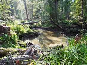 Photo: Some of the wetlands were restored in the forest.