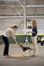 Photo: Shelter Medicine Hands-on Behavior Workshop