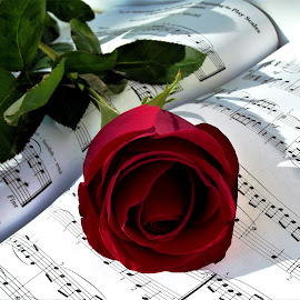 rose and sheet music by László Nagy - Uncategorized All Uncategorized (  )