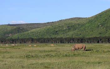 Photo: Big Five eläin! Sarvikuono, tässä isosarvikuono