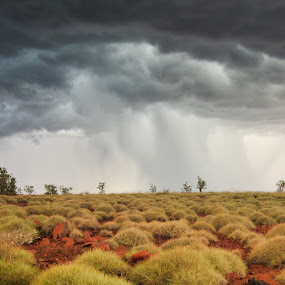 Thunderstorm Hitting Spinifex by Frederik Schulz - Landscapes Weather ( cyclone, australia, spinifex, pwcstorm, millstream, storm, western australia )