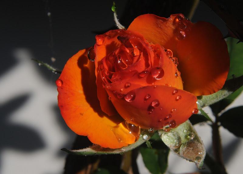 il sole dopo la pioggia di mousix