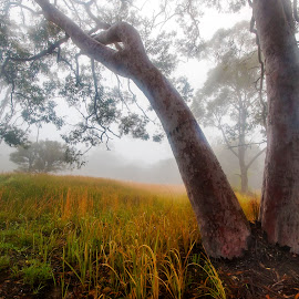 Tree & Fog by Geoffrey Wols - Nature Up Close Trees & Bushes ( grass, yellow, fog,  )