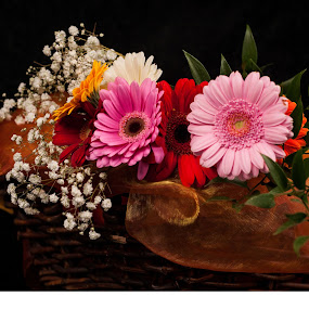 Flower basket by Renata Horáková - Flowers Flower Arangements ( germini, basket, gerbera, black, flower,  )