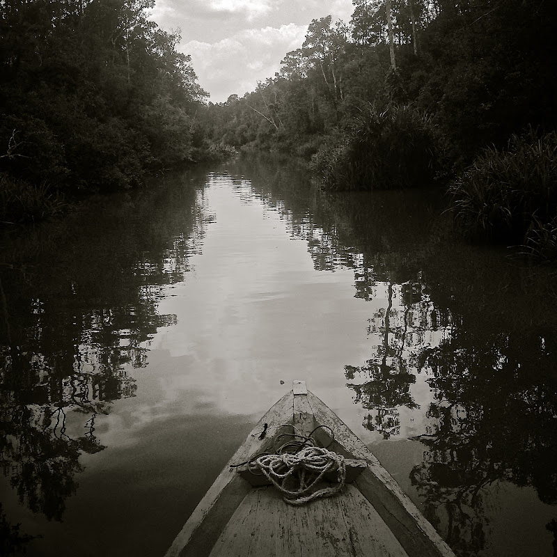 Il silenzio della foresta di Alessandra Alba