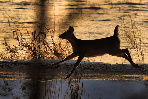 NDA Celebrates Introduction of the Recovering America's Wildlife Act in the Senate