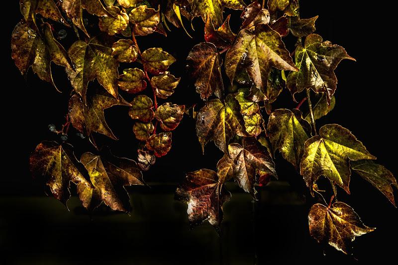 Giallo oro di Scaletta
